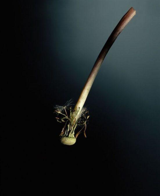 barbara-steinman-hollowstem_françoise-paviot
