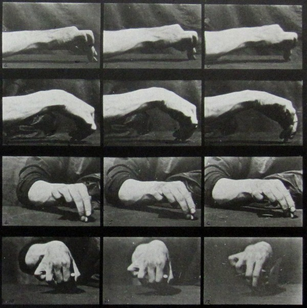 eadweardmuybridge_animallocomotion1_françoisepaviot