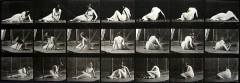 Eadweard Muybridge : Animal locomotion