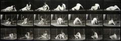 Eadweard Muybridge : Animal locomotion